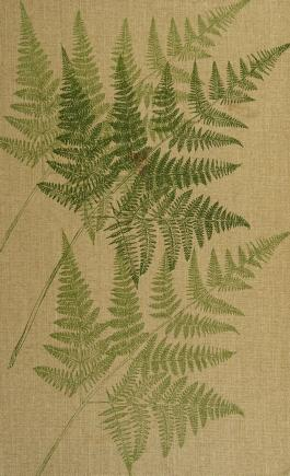 Cover of: Pacific Northwest ferns and their allies | Thomas Mayne Cunninghame Taylor